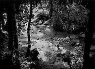 Balang Weng, a Penan man, crosses a stream in an old growth forest in the heart of Borneo on the way to a logging road barricade to try and keep Samling Global Ltd. logging company out of this unprotected forest, the traditional hunting grounds of his Penan clan.  The Penan used to roam the rainforest following game or fruit that was in season as nomads.  This is no longer possible because selective logging has pulled out important trees, damaged the soil, silts up rivers reducing food for the Penan, fish in streams and prey animals on the forest floor and in the canopy.  Now, they can no longer sustain themselves from the forest alone and suppliment their diet with rice bought from the nearest towns, like Long Lellang.