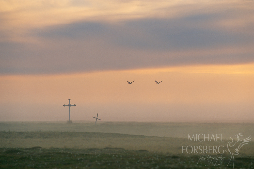 Sandhill Cranes, Yukon-Kuskokwim River Delta, Alaska.  Often referred to as birds of heaven, pair of cranes fly over crosses that mark a Yupik cemetery near Old Chevak, once the site of a Yupik Eskimo village. Traditional hunters and fishermen, the Yupik people have subsisted on this land for thousands of years.