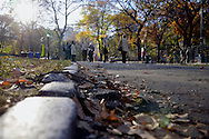 Central Park, curbstone and Fall.