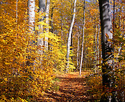 BB07025-03...MICHIGAN - Trail through a hardwood forest at Warren Woods State Park.