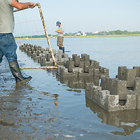 Biologists Record Measurements from Newly Constructed Oyster Castles and the surrounding Spartina marsh