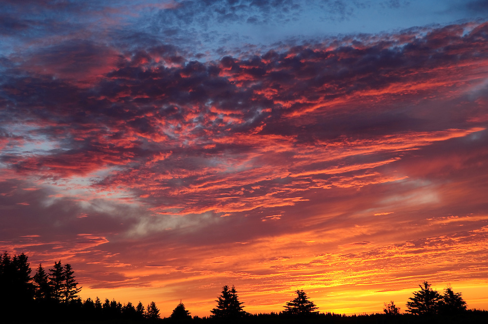 Sunrise sky and clouds over forest at Greenwich, Prince Edward Island National Park; PEI, Canada. .