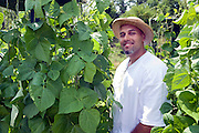 """Carlos Rosario in the garden at Bard College in Annandale-on-Hudson, New York. He helped creating it after his release from prison in May 2010...Story: The Bard Prison Initiative.Former inmate Carlos Rosario, 35-year-old husband and father of four, was released from Woodbourne Correctional Facility after serving more than 12 years for armed robbery. Rosado is one of the students participating in the Bard Prison Initiative, a privately-funded program that offers inmates at five New York State prisons the opportunity to work toward a college degree from Bard College. The program, which is the brainchild of alumnus Max Kenner, is competitive, accepting only 15 new students at each facility every other year. .Carlos Rosario received the Bachelor of Arts degree in social studies from the prestigious College Saturday, just a few days after his release. He had been working on it for the last six years. His senior thesis was titled """"The Diet of Punishment: Prison Food and Penal Practice in the Post-Rehabilitative Era,"""".Rosado is credited with developing a garden in one of the few green spaces inside the otherwise cement-heavy prison. In the two years since the garden's foundation, it has provided some of the only access the prison's 800 inmates have to fresh vegetables and fruit...Rosario now works for a recycling company in Poughkeepsie, N.Y...Photo © Stefan Falke"""