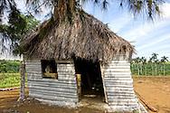 Hurricane warped shed in Orlando Nordase, Mariel, Artemisa, Cuba.