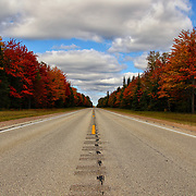 &quot;Born to be Wild&quot;<br />
