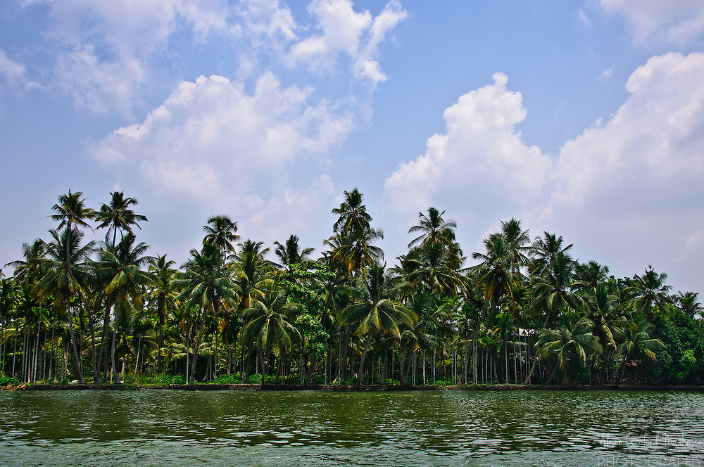 Tropical palm trees in the Kerala Backwaters