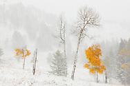 Primera nevada de otoño, Yellowstone NP, Wyoming (Estados Unidos)