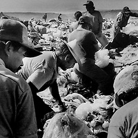 Garbage pickers in landfill outside of Tijuana, Mexico.  1996