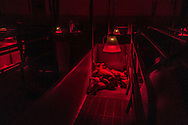 "The meat Industry created two-foot-by-seven-foot gestation crates so sows couldn't bite one another's tails. Often sows crush their young by lying down, cause unable to move. These red ""Heat lamps"" are special infrared lamps that duplicate infrared sunlight. Inside a massive livestock farm the swines never going to see the light of the day so these infrared rays, that don't heat up the air, are instead absorbed by swines to reach desired weight as soon as possible to be slaughtered and sold by the global market."