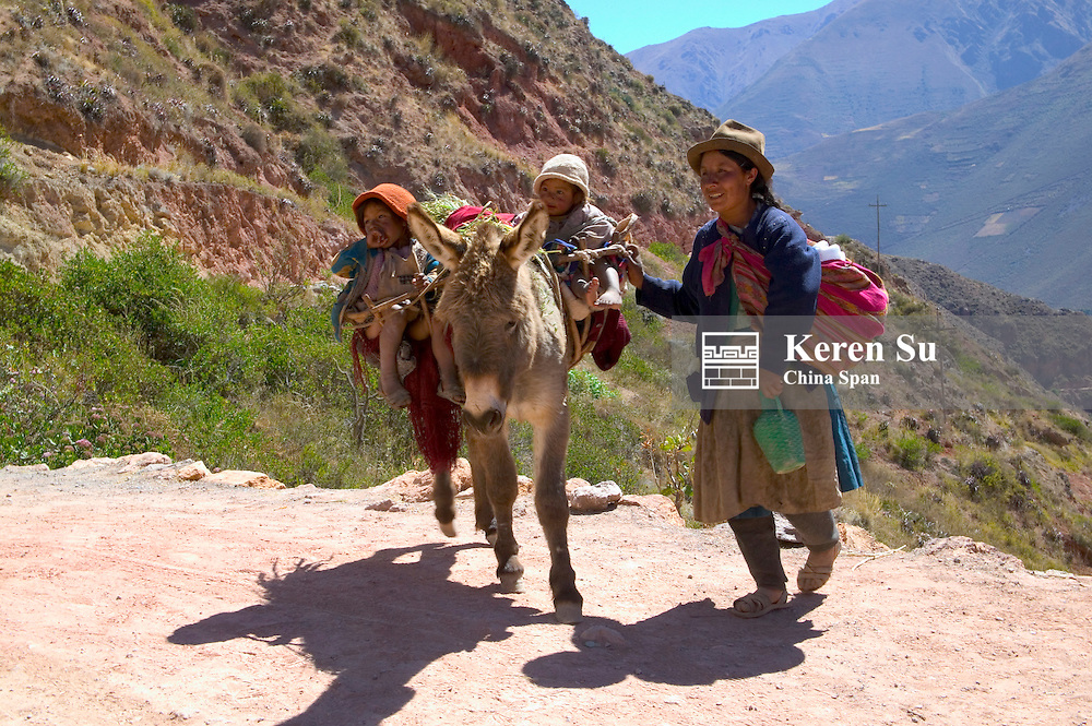 Indian family traveling on donkey in Sacred Valley, near Cuzco, Peru