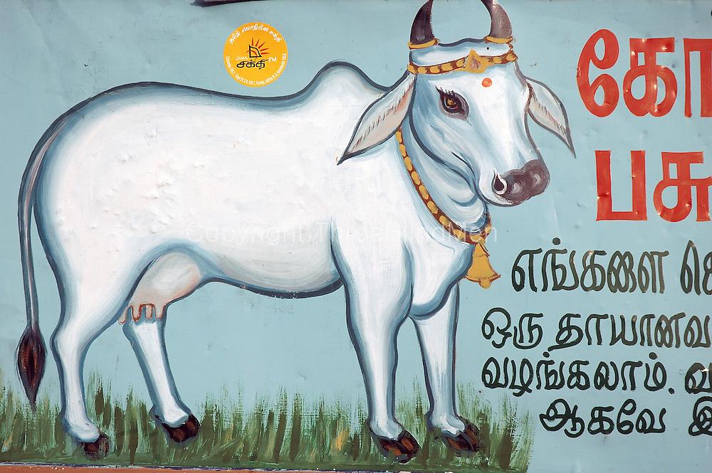 Painted Nandi. Annual Nallur Kandaswamy festival.