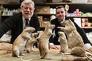 Aurouze family, rat killers PR561A