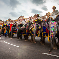 Elephant perpair for the Teej festival parade in Jaipur, Rajasthan, India.