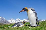South Georgia and Falkland Islands