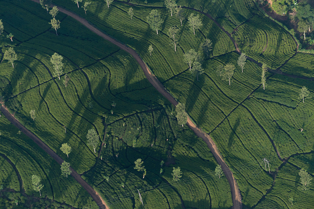 Tea estates. Aerial view. Sri Lanka.