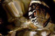 Nature - Portuguese Wildlife