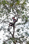 A young girl plays in a tree.<br /> Close to the mouth of the Samaria River in the Pacaya Samaria national reserve villagers of Saint Martin de Tipishca are increasingly concerned about the number of oil spills in the area that threaten their local communities.
