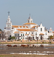 Horses in the marshes in front of the Village of El Rocio, Huelva, Spain