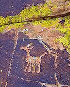 0142-1000 ~ Copyright: Sinagua culture petroglyph, near Montezuma Well. Coconino National Forest, Arizona.