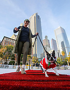 Dogs walk red carpet strut across the ice rink