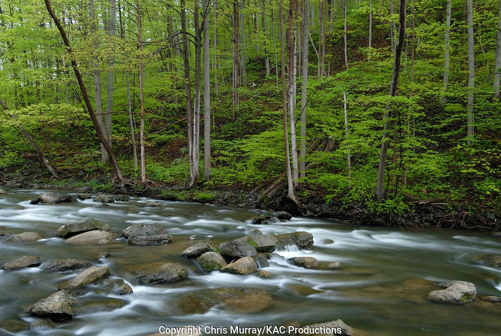 Spring along Chittenango Creek, Chittenango Falls State Park, New York, USA