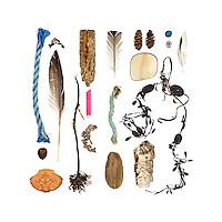 polypropylene trap line, acorn, Rock Crab (Cancer irroratus), Fucus sp. with Spirorbis sp., feather, holdfast, driftwood, lobster trap tag, seaweed covered in bryozoan colony, feather, trap rope, driftwood, spruce cones, sunglasses lens, Ascophyllum nodusum, birch bark (Betula papyrifera), painted wood peg, Tortoiseshell Limpet (Testudinalia testudinalis), feather