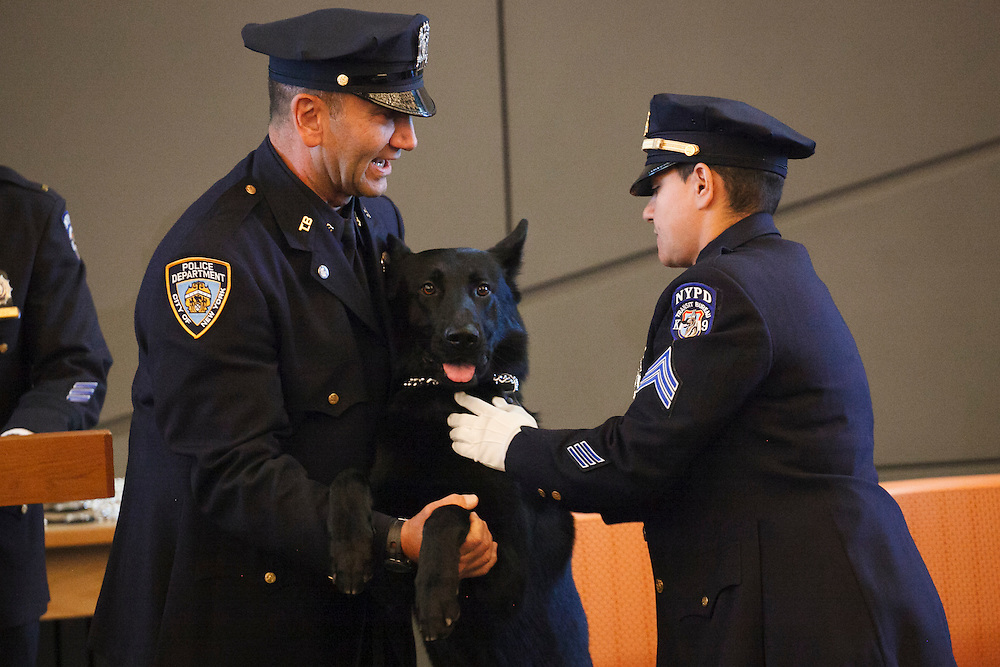 Police Officer Andreas Savva, left, with Canine JC, honoring Police Officer Joseph Caputo, as the Canine receives his badge during the NYPD Transit Bureau Canine Unit Graduation Ceremony at the College Point Police Academy in Queens, NY on Tuesday, Oct. 6, 2015.<br /> <br /> Andrew Hinderaker for The Wall Street Journal<br /> NYSTANDALONE