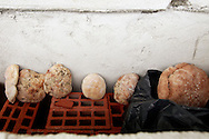 """Ivan puts the bread that he doesn't eat outside the window of his """"room"""" but this ends up winning mold by being exposed to the elements."""