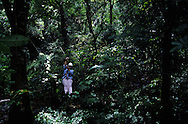 Tourists sliding in rappel over the canopy forest.