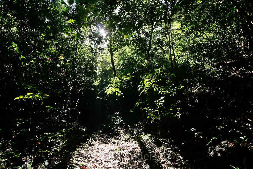 Tropical rainforest in Rajah Sikatuna National Park, Bohol, Philippines