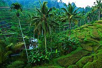 Rice terrace in Tegelalang - though not in the town of Ubud itself, the rice terraces here are a popular excursion for visitors to Ubud to go up and admire the many hues and shades of green at the rice terraces.