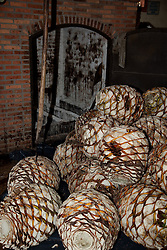 """Agave Piñas""- These agave piñas are used in making tequila.  Photographed near Puerto Vallarta, Mexico."