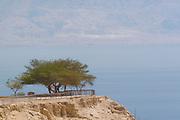 Israel, Dead Sea Ein Gedi national park