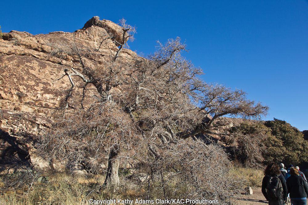 Weathered rock formations at Hueco Tanks State Historical Park, outside El Paso, Texas.