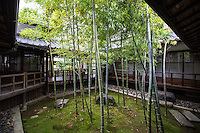 "Myokenji Bamboo Garden is a small, rectangular courtyard garden composed of bamboo which regrows every year.  The composition is said to have been based on a scoll painting ""Sho Chiku Bai Zu"" by Kohrin Ogata.  This garden has appeared in Nescafe commercials for its freshness."