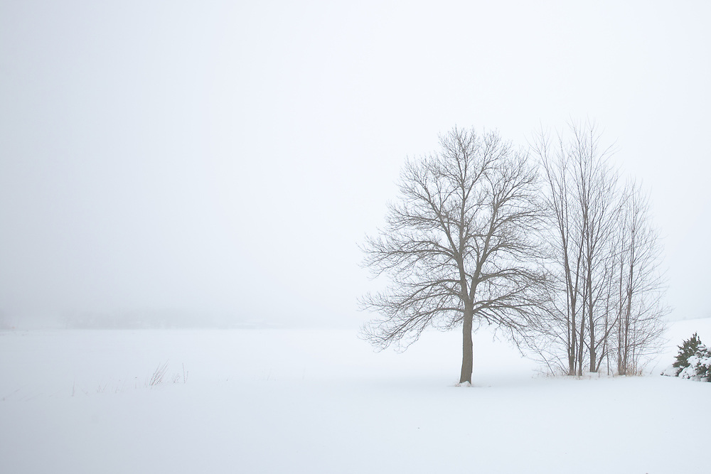 Bare Trees on a foggy winter day