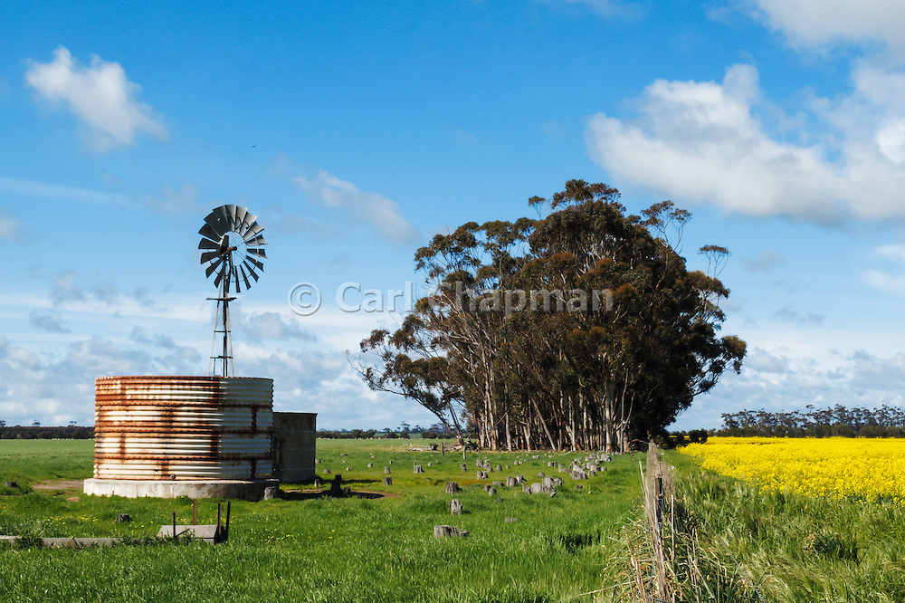 Windmill in paddock next to flowering canola crop in rural Mingay, Victoria, Australia.