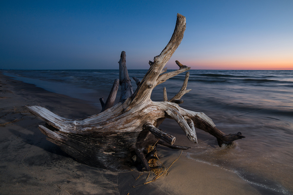 Roots of an old tree sits on the lakeshore at dusk