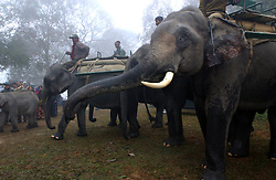 Tourists ride domesticated elephants in the pre dawn hours to catch a glimps of  wild rhinos, tigers, elephants and other animals in the Kazaringa National Park in Assam, India January 5, 2003/(Ami Vitale)