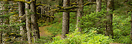 Fort Abercrombie State Historical Park, Kodiak, Alaska<br /> LIMITED EDITION PRINT