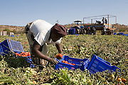Zimbabweans who cross both legally and illegally into South Africa find seasonal work at one of the many vegetable/citrus farms that run along the international border on the South African side. Many have passes that grant them employment in South Africa on the farms but many others 'jump' the border near tot he location of the farms in the hope of not beig found by South African immigration authorities. ..Those found working illegaly are deported only to return within days, often using the same illegal border crossing point as previously used...