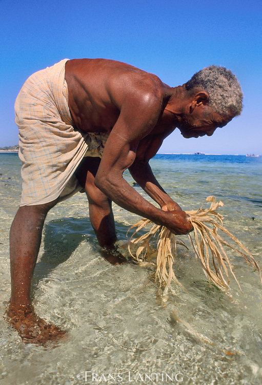 Vezo man soaking baobab tree bark for making rope, Wetsern Madagascar