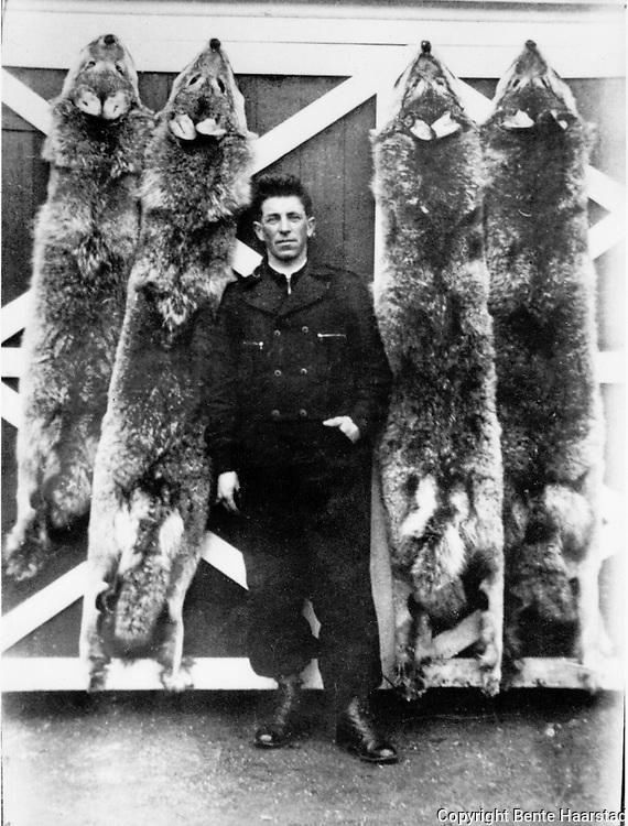 Alfred Andersson Gjefsjø fra Gjevsjøen fjellgård i Snåsa i Nord-Trøndelag, med de fire ulvene han skjøt i 1939, tre av dem på samme dag, fra en flokk med ni ulver. De tre største var ca. 80 kg, den minste ca. 60 kg. En teori er at det var vinterkrigen mellom Russland og Finland som skremtte ulvene og fordrev dem helt til Trøndelag. Vinterkrigen startet i 1939.