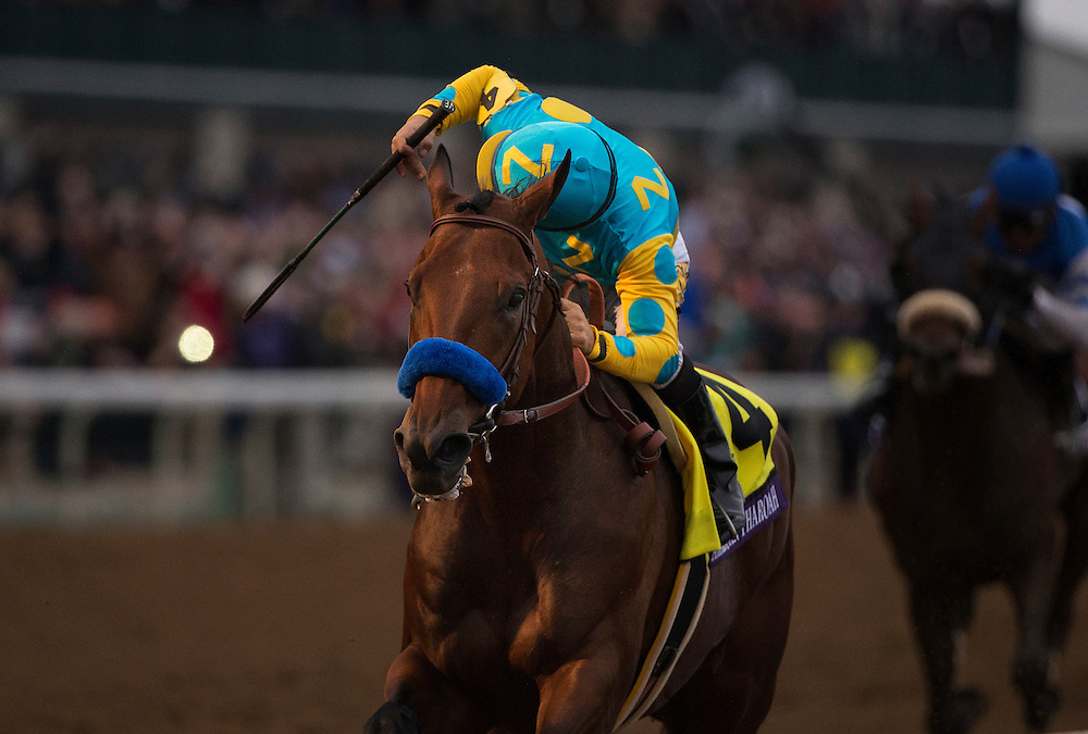 October 31, 2015:  American Pharaoh with Victor Espinoza up wins the Breeders' Cup Classic at Keeneland Race Track in Lexington, Kentucky. Evers/ESW/CSM