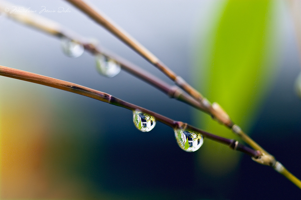 Rain drops with house reflection on Bamboo / dr005