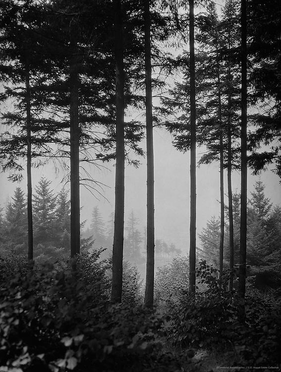 Mount Tabor, Portland, Oregon, USA, 1926
