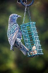 Birds feeding in the garden..©Michael Schofield.