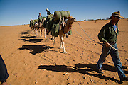 Camel Trek just outside William Creek in North Eastern South Australia. Russell Osbourne Cameleer leads the camels..Explore the Outback camel safaris are based in the central Australian deserts near William Creek along the Oodnadatta Track (Lake Eyre, South Australia), and operate from April through to October every year.
