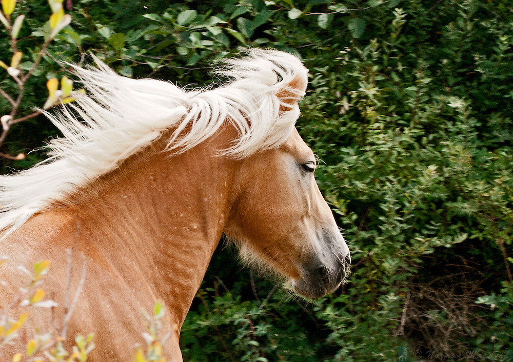 Horse running through the woods near Port Townsend on Washington's Olympic Peninsula