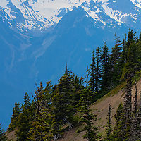 Slope of trees and view of Olympic Mountains - Olympic National Park, WA